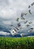 Money-cornfield